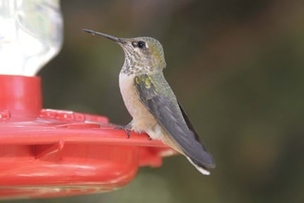 Hummingbird Feeder, West Texas