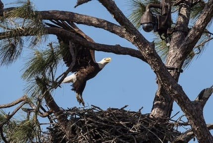 Florida Eagles