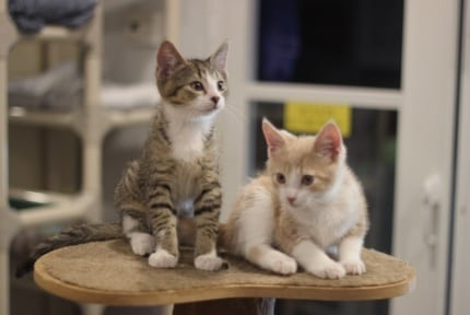 Friends of Felines Rescue Center: Cats