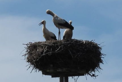 Stork Nest, Germany